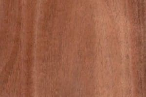 Tasmanian Blackwood – CC only